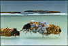 PH-CSV_DUPRAT Hubert - Tubes de larves aquatiques de trichoptŠres - 1980-2003 - sl_Delpech (F) (1)_DR.tif - image/tiff